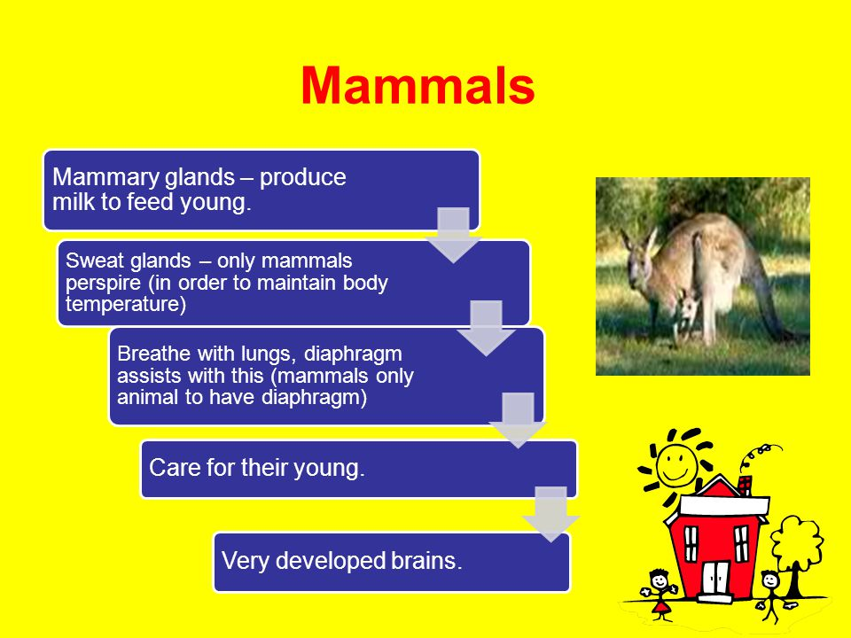 Mammals Mammary glands – produce milk to feed young.