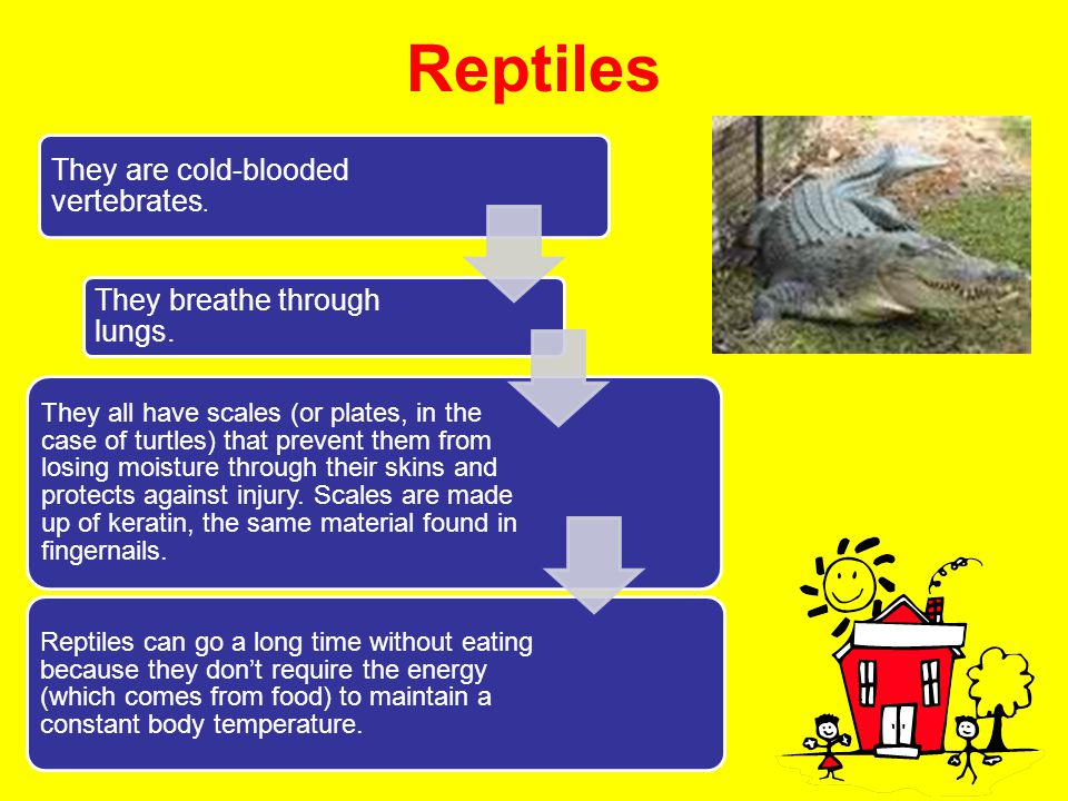 Reptiles They are cold-blooded vertebrates.