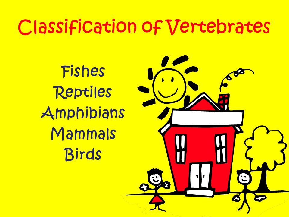 Classification of Vertebrates