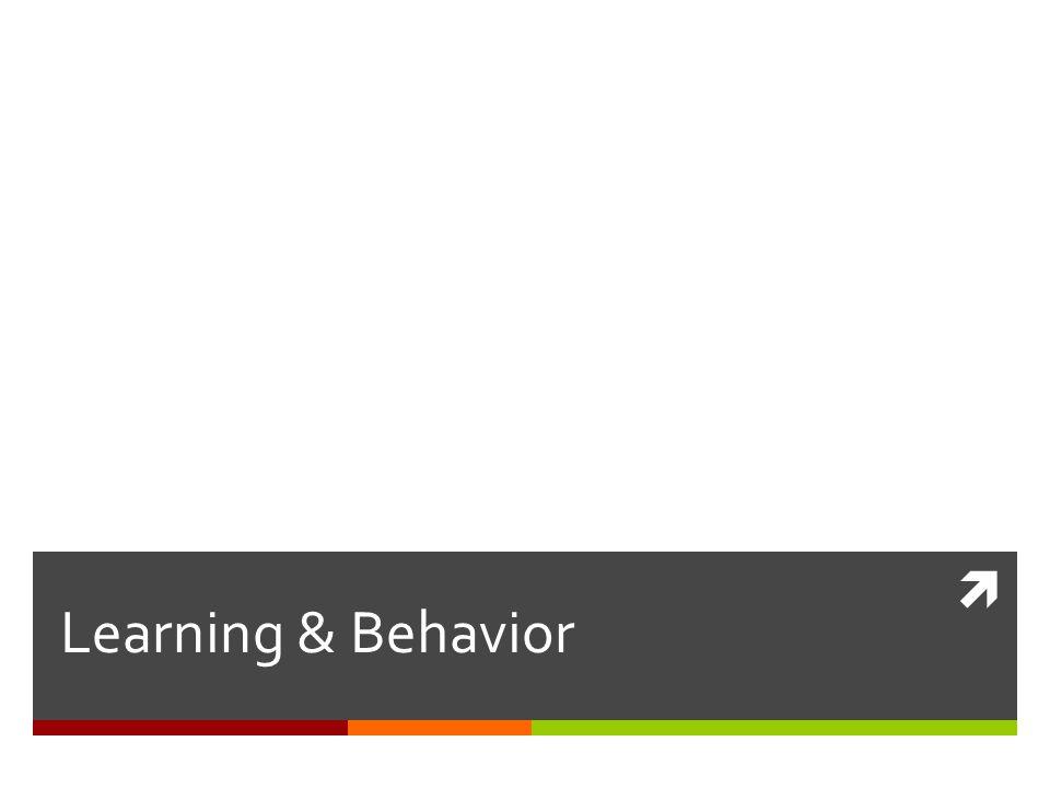 Learning & Behavior