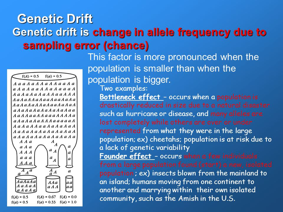 Genetic Drift Genetic drift is change in allele frequency due to sampling error (chance)