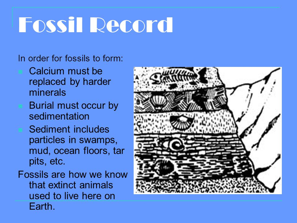 Fossil Record Calcium must be replaced by harder minerals