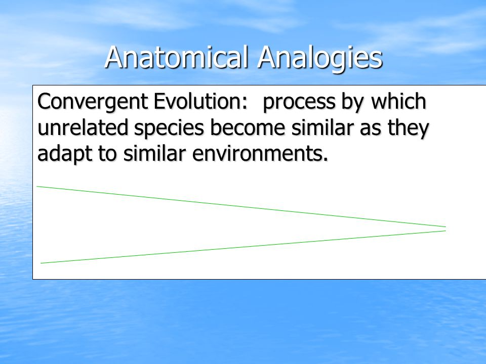 Anatomical Analogies Convergent Evolution: process by which unrelated species become similar as they adapt to similar environments.