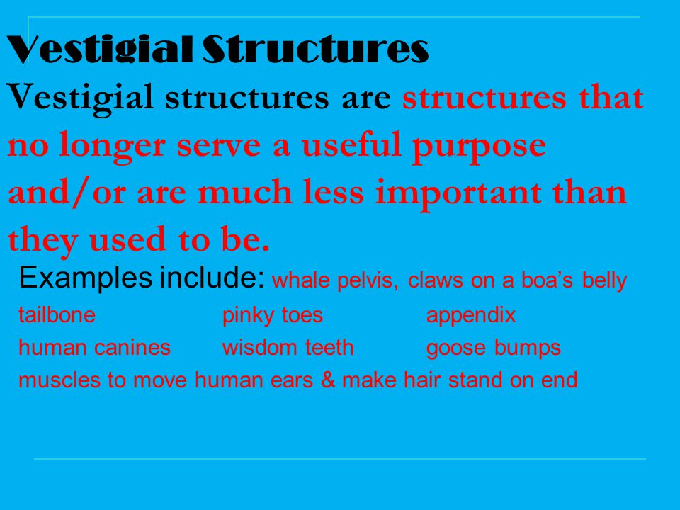 Vestigial Structures Vestigial structures are structures that no longer serve a useful purpose and/or are much less important than they used to be.