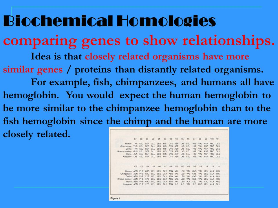 Biochemical Homologies comparing genes to show relationships.