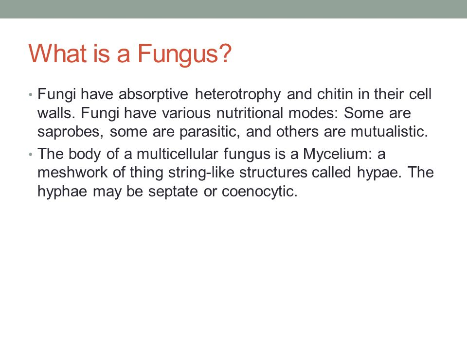 What is a Fungus