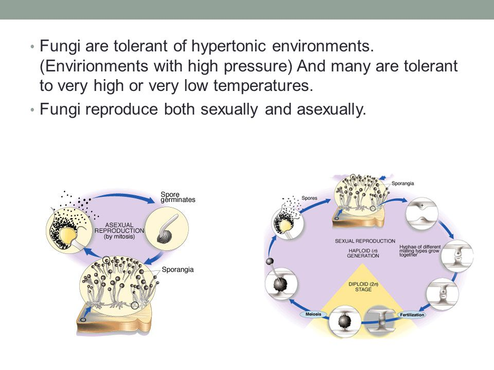 Fungi are tolerant of hypertonic environments