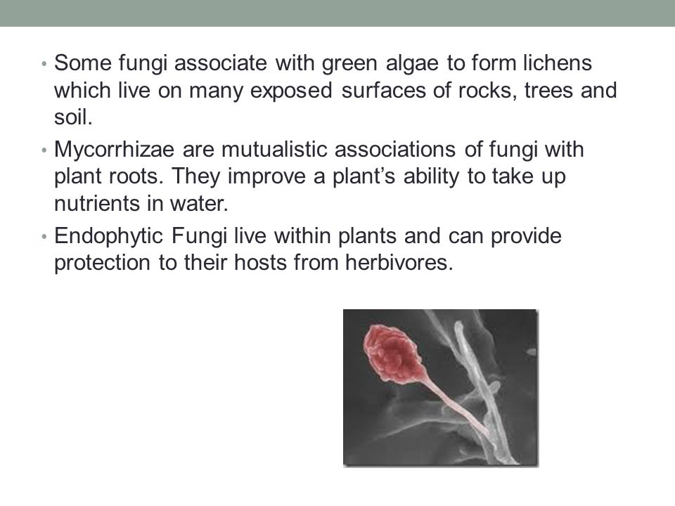 Some fungi associate with green algae to form lichens which live on many exposed surfaces of rocks, trees and soil.