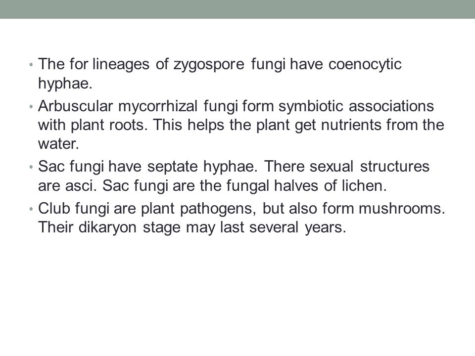 The for lineages of zygospore fungi have coenocytic hyphae.