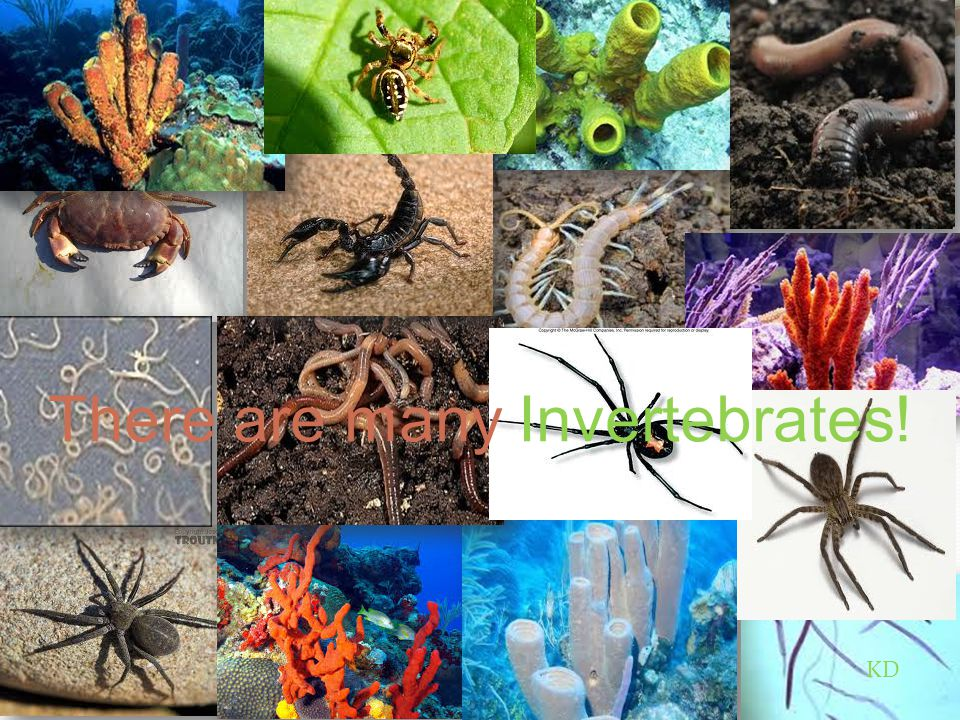 There are many Invertebrates!