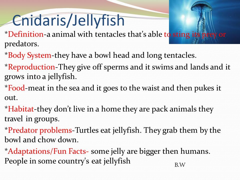 Cnidaris/Jellyfish