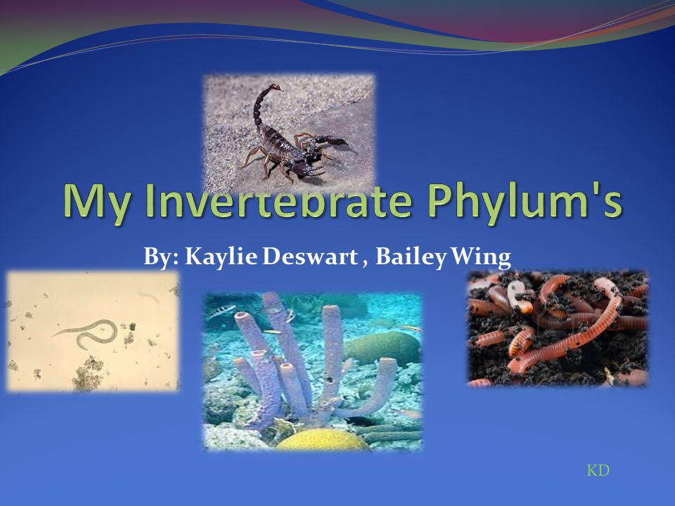 My Invertebrate Phylum s