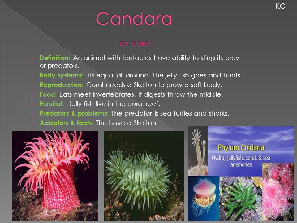 KC Candara ex: coral. Definition: An animal with tentacles have ability to sting its pray or predators.