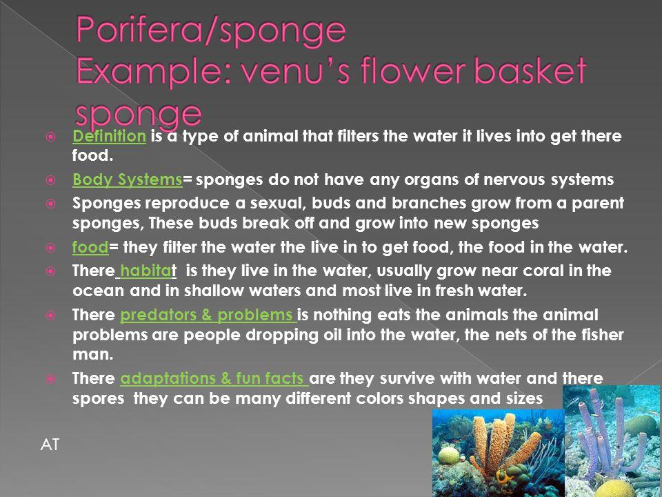 Porifera/sponge Example: venu's flower basket sponge