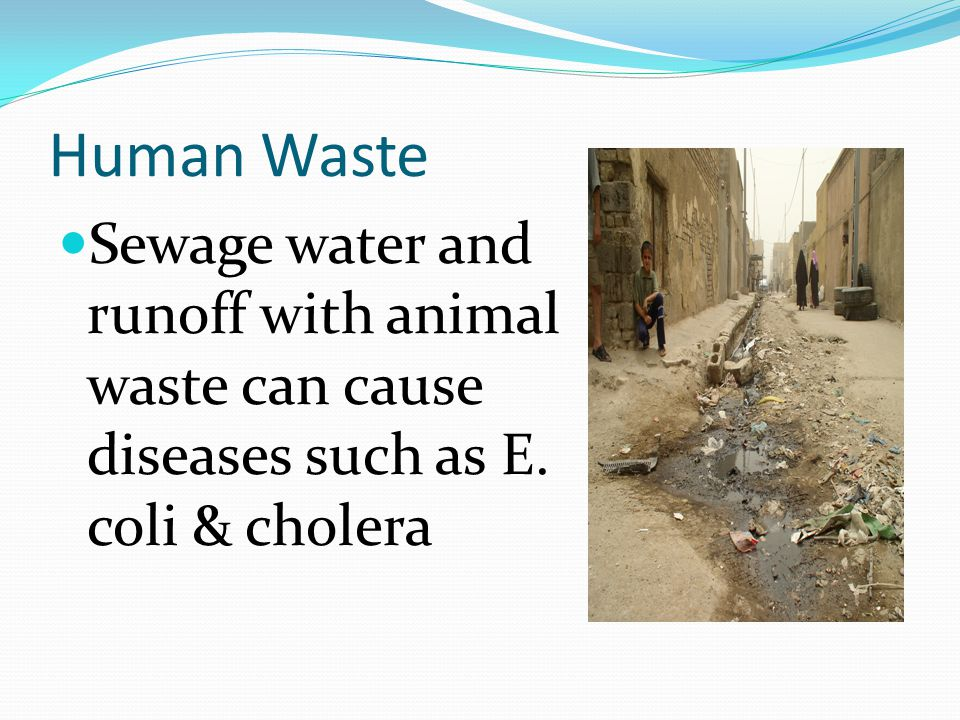 Human Waste Sewage water and runoff with animal waste can cause diseases such as E. coli & cholera