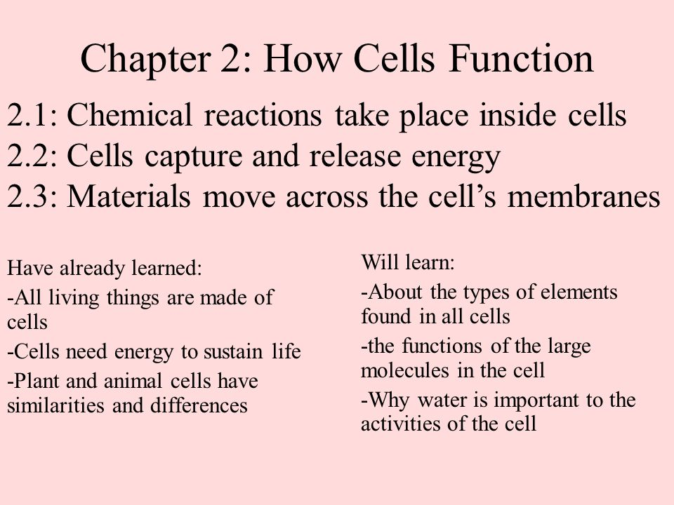 Chapter 2: How Cells Function