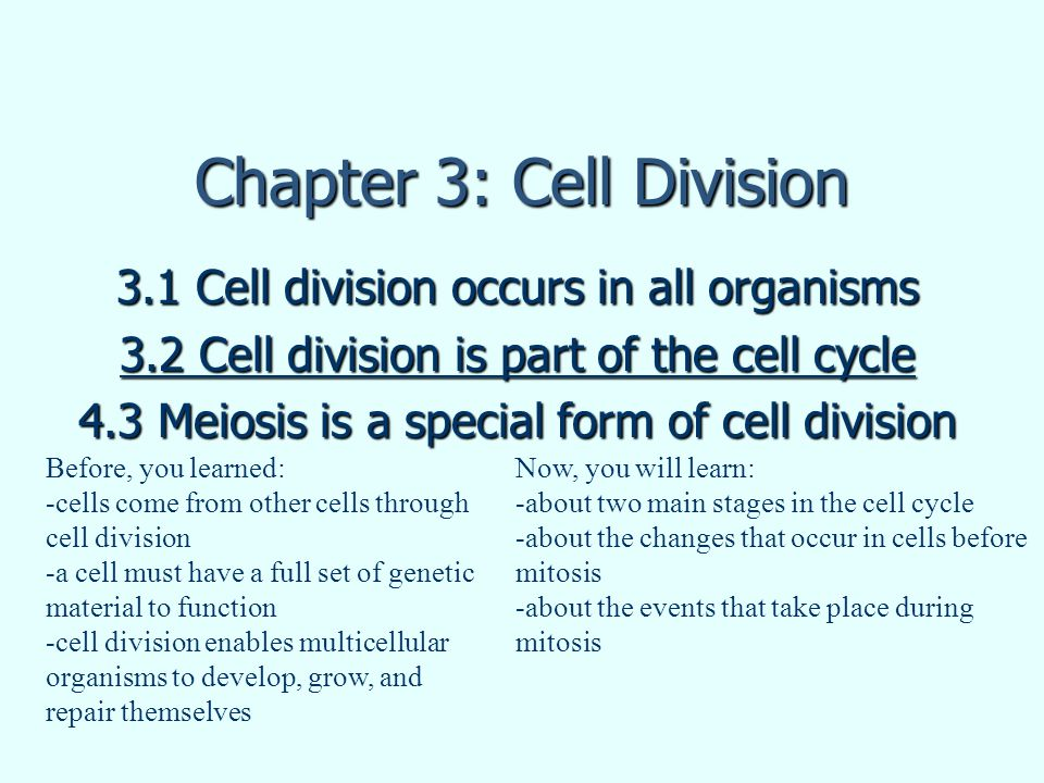 Chapter 3: Cell Division