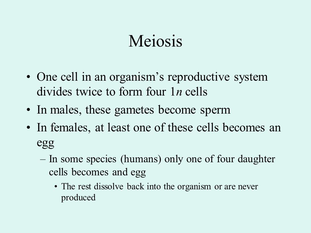 Meiosis One cell in an organism's reproductive system divides twice to form four 1n cells. In males, these gametes become sperm.