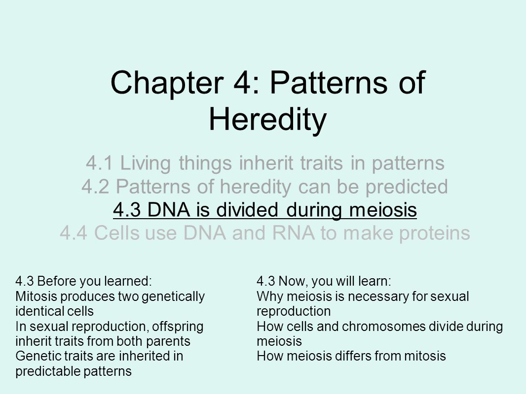 Chapter 4: Patterns of Heredity