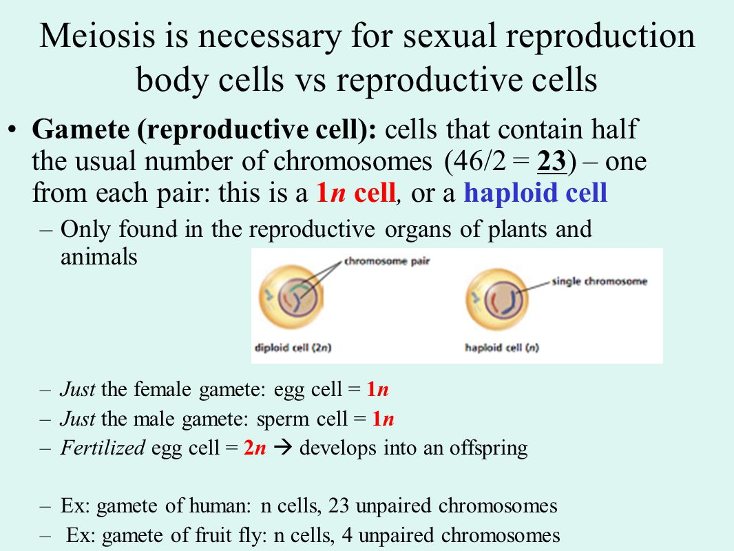 Meiosis is necessary for sexual reproduction body cells vs reproductive cells
