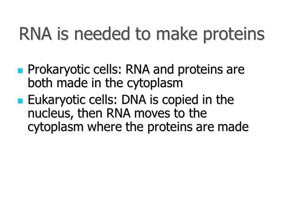 RNA is needed to make proteins