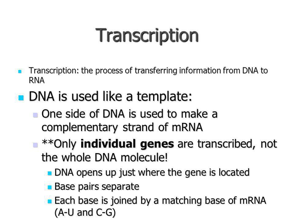 Transcription DNA is used like a template: