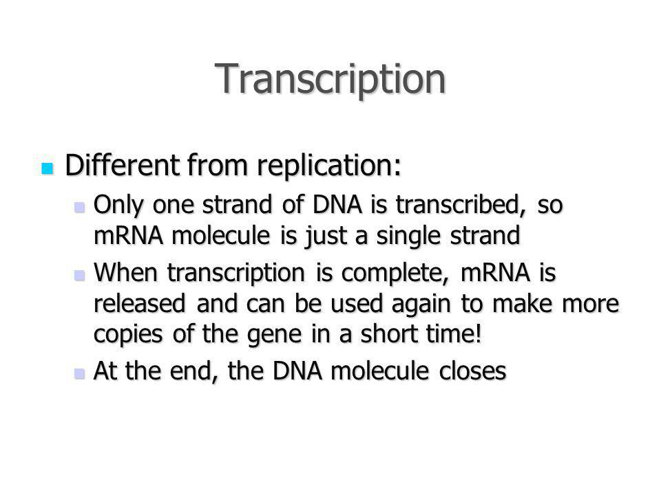 Transcription Different from replication: