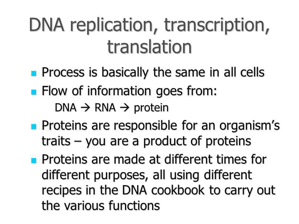 DNA replication, transcription, translation