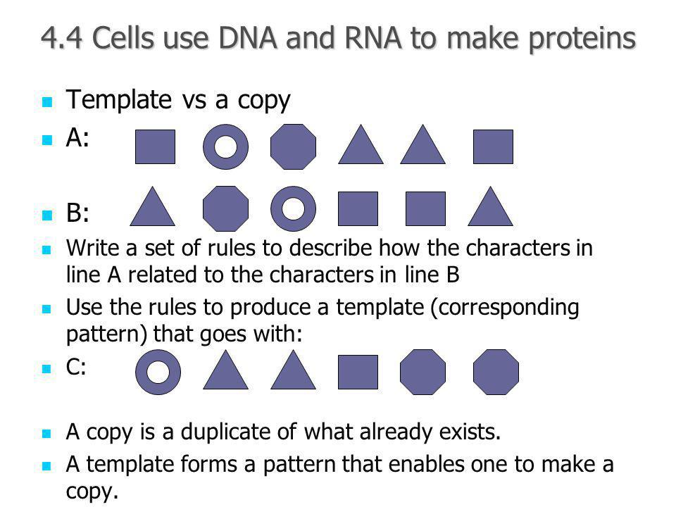 4.4 Cells use DNA and RNA to make proteins