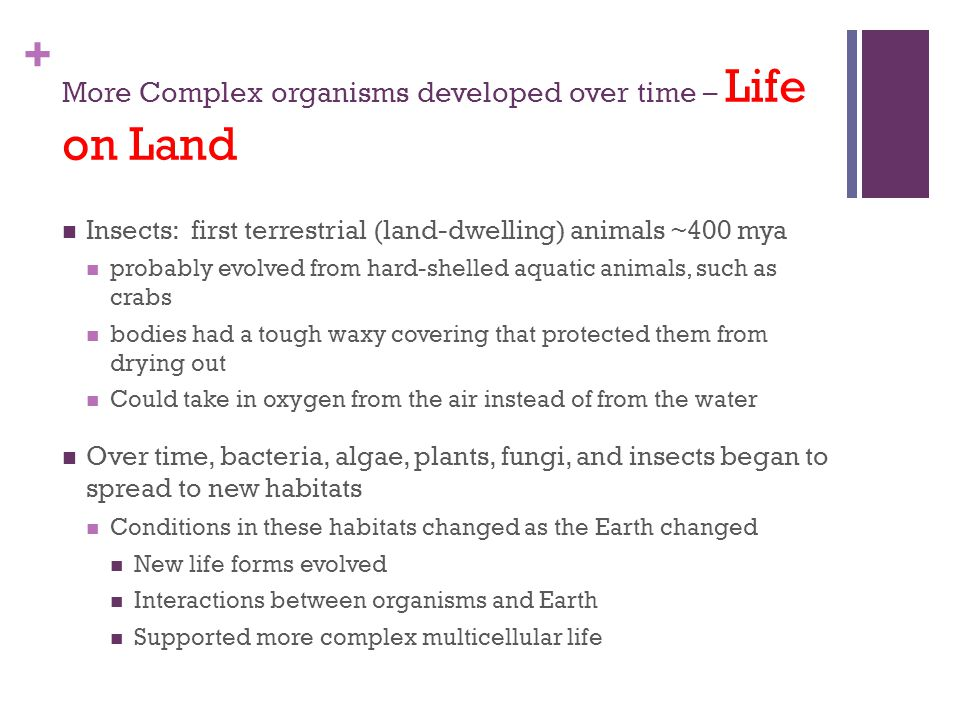 More Complex organisms developed over time – Life on Land