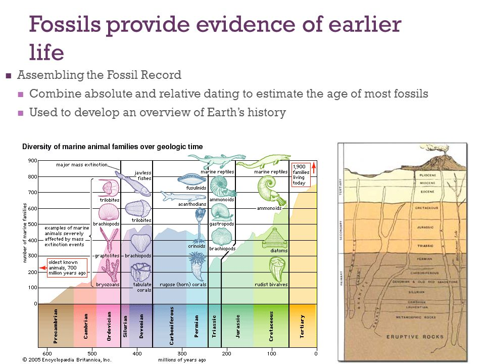 Fossils provide evidence of earlier life