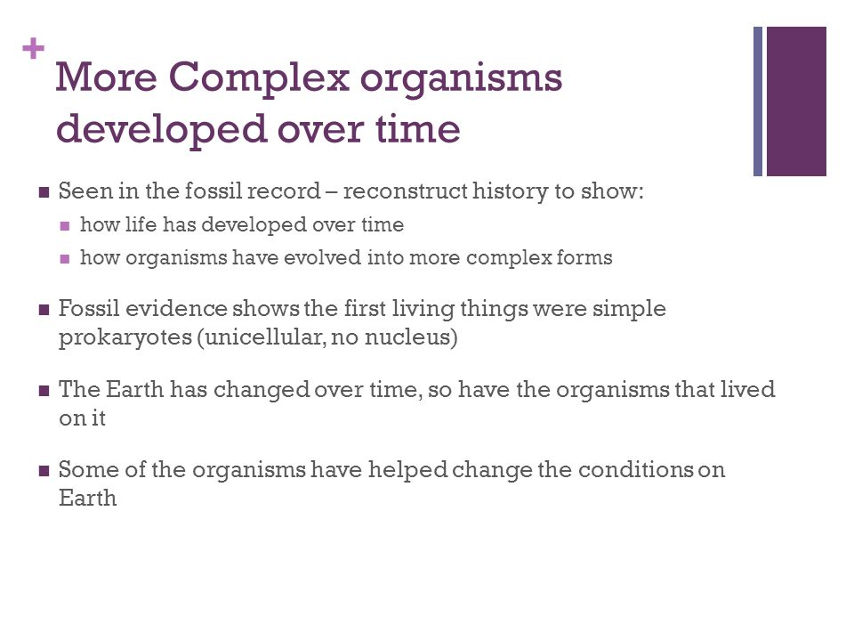 More Complex organisms developed over time