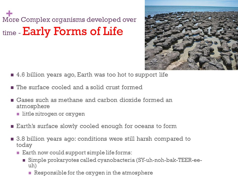 More Complex organisms developed over time - Early Forms of Life