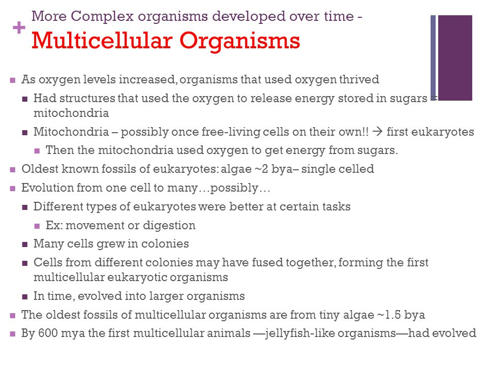More Complex organisms developed over time - Multicellular Organisms