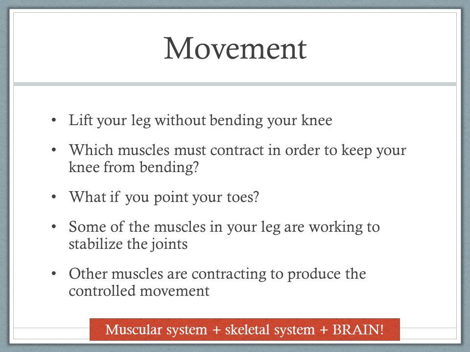 Muscular system + skeletal system + BRAIN!