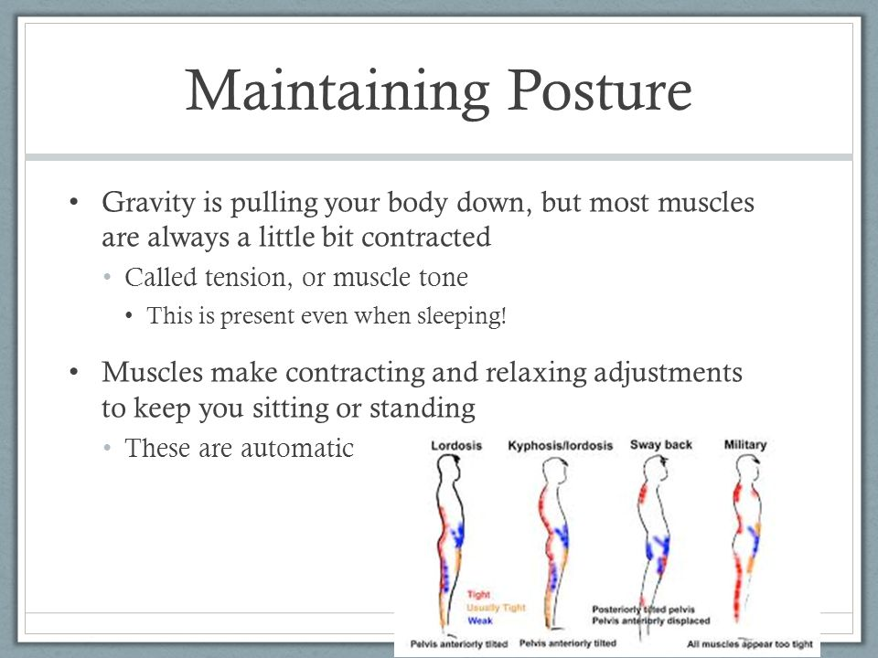Maintaining Posture Gravity is pulling your body down, but most muscles are always a little bit contracted.