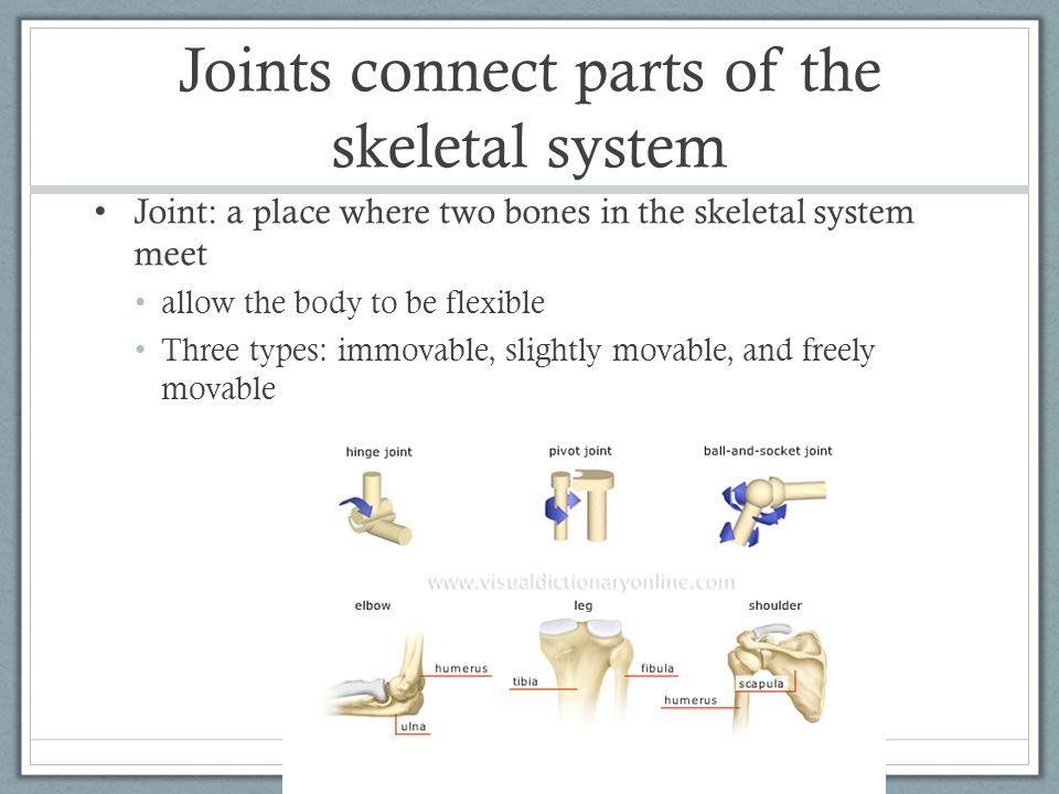 Joints connect parts of the skeletal system