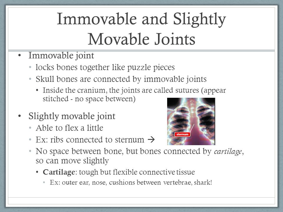 Immovable and Slightly Movable Joints