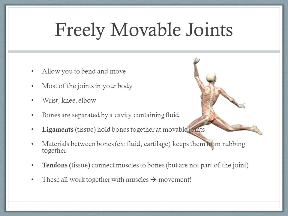 Freely Movable Joints Allow you to bend and move