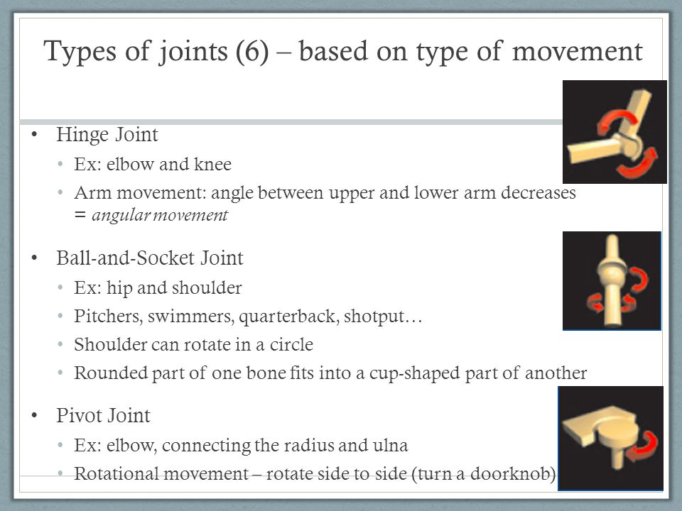 Types of joints (6) – based on type of movement