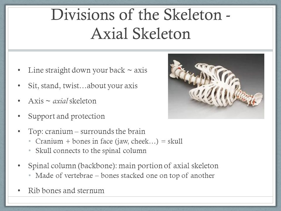 Divisions of the Skeleton - Axial Skeleton