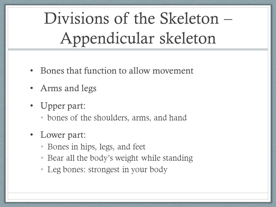 Divisions of the Skeleton – Appendicular skeleton