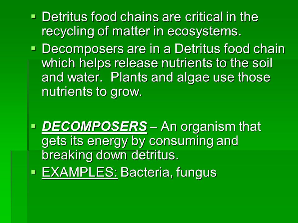 Detritus food chains are critical in the recycling of matter in ecosystems.