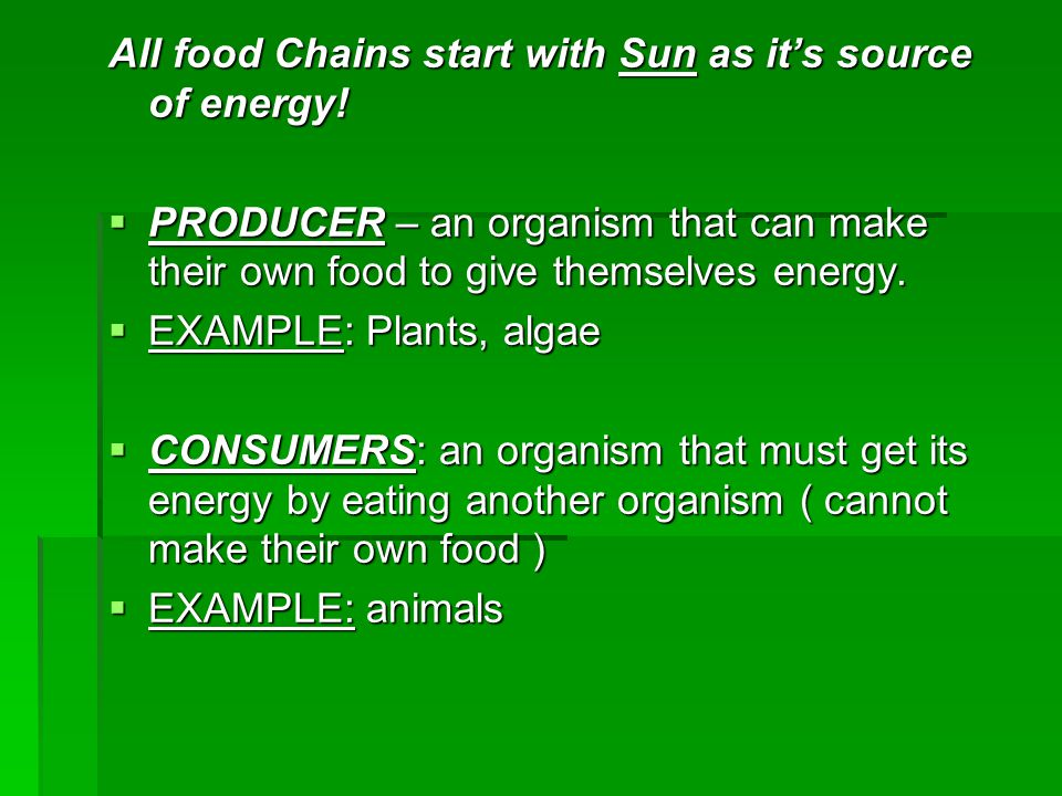 All food Chains start with Sun as it's source of energy!