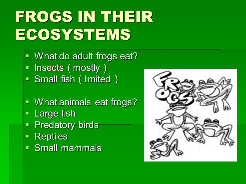 FROGS IN THEIR ECOSYSTEMS