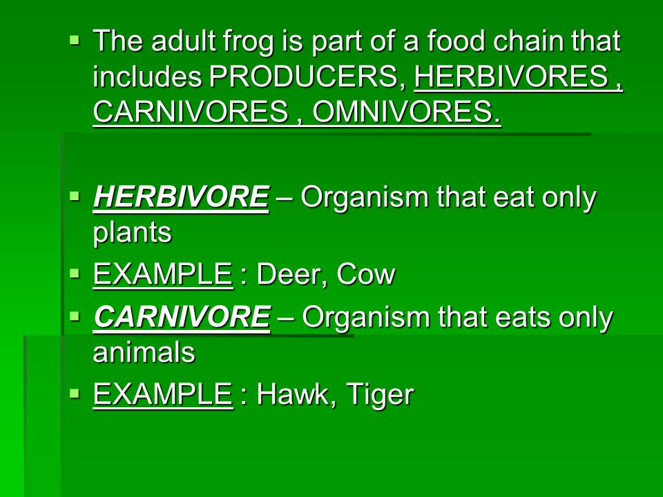 The adult frog is part of a food chain that includes PRODUCERS, HERBIVORES , CARNIVORES , OMNIVORES.