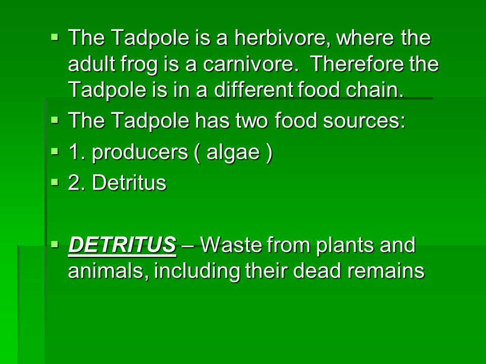 The Tadpole is a herbivore, where the adult frog is a carnivore