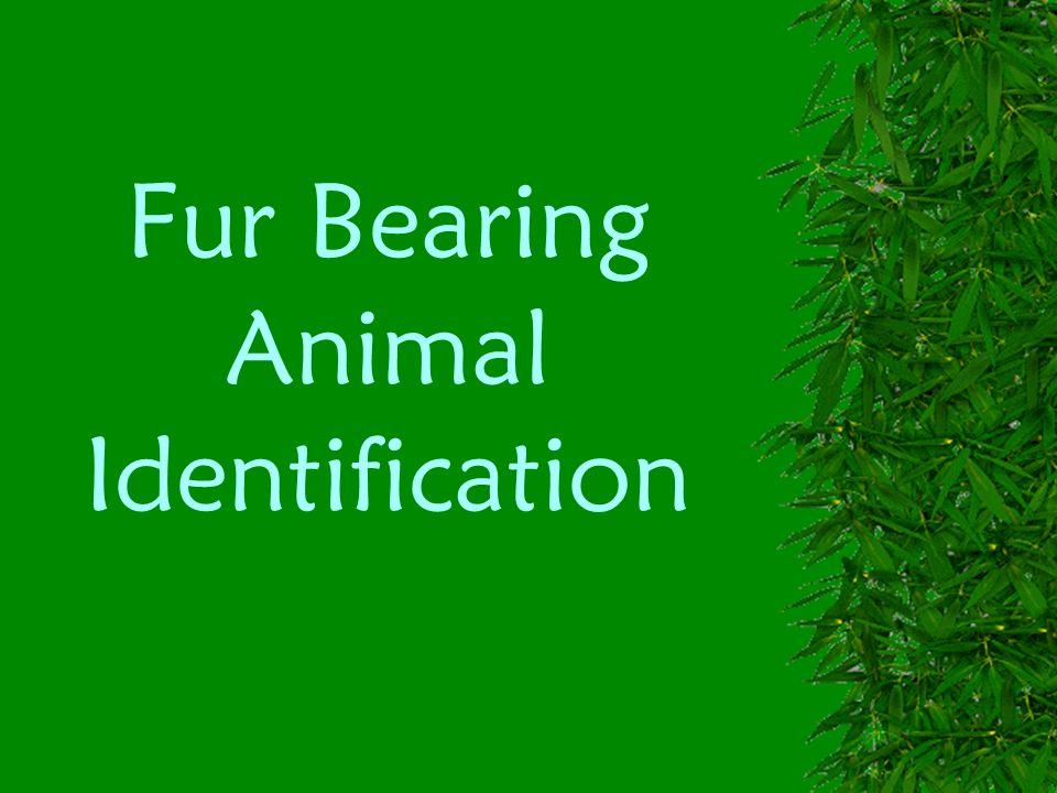 Fur Bearing Animal Identification