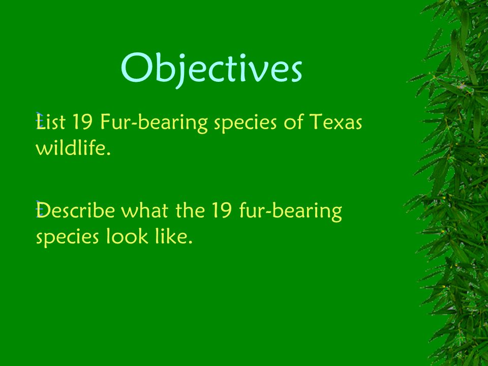 Objectives List 19 Fur-bearing species of Texas wildlife.