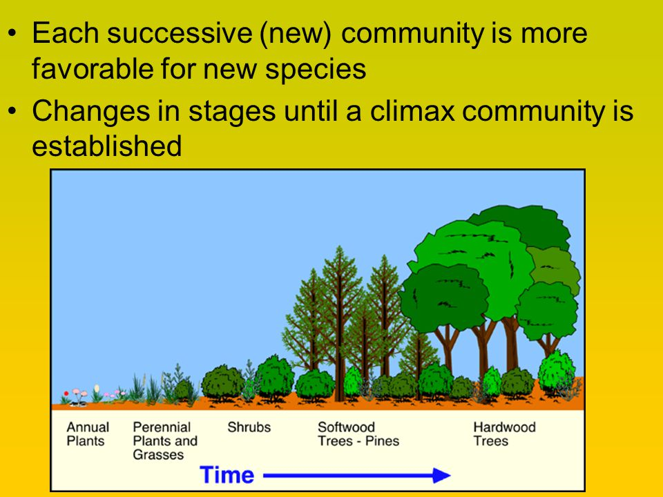 Each successive (new) community is more favorable for new species